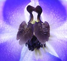 Kissing Ducks by Julie  Hamilton