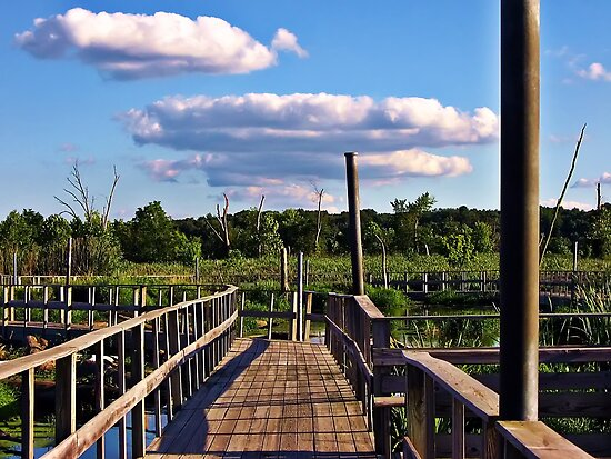 Wetlands Boardwalk by Tracy DeVore