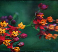 The World of Tiny Flowers by Marilyn Harris