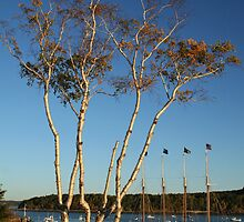 Birch tree on the Harbor by Linda Jackson