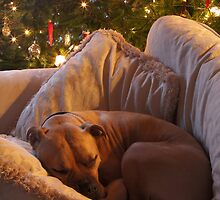Not a Creature was Stirring... by Chris Snyder
