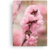 Spring arrives softly Canvas Print