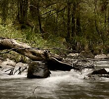 Tuponga River by Alex Evans