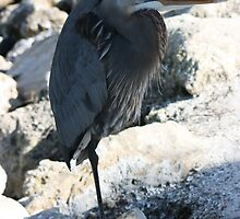 The Great Blue Heron (Self Reliant) by elegantmemories
