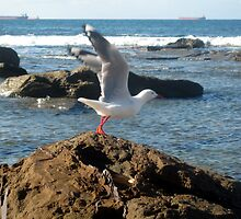 Seagull at Merewether Beach by Cheryl Parkes