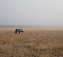 Gemsbok in the Mist, Central Kalahari, Botswana, Africa by Adrian Paul