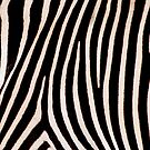 Zebra Pattern by Linda More