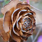 Fallen Rose by Carol Barona