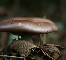 Fungus among us... by Anne Murphy