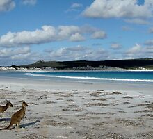 Lucky Bay - West Australia by Belinda Anderson