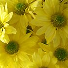 Yellow Chrysanthemums by Marilyn Harris