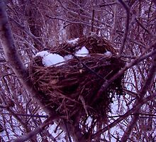 Old Nest by JimCool