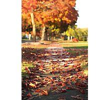 Autumn Path in Orange Photographic Print