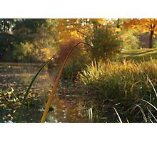 Orange Reed Photographic Print