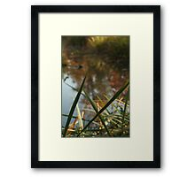 Through Nature Framed Print