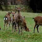 Studley Royal Deer Park,   again! by dougie1