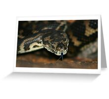 South-West Carpet Python Greeting Card