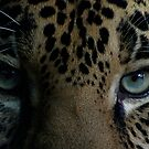 Infinite Eyes Female Jaguar by IanPharesPhoto