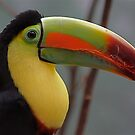 Fruit Loops Toucan by IanPharesPhoto