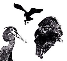 pen and ink birds by sublimy99