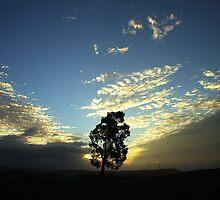 tree in field by peteroxcliffe