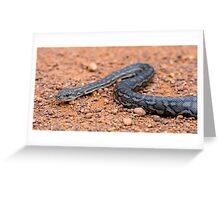 Carpet Python Greeting Card