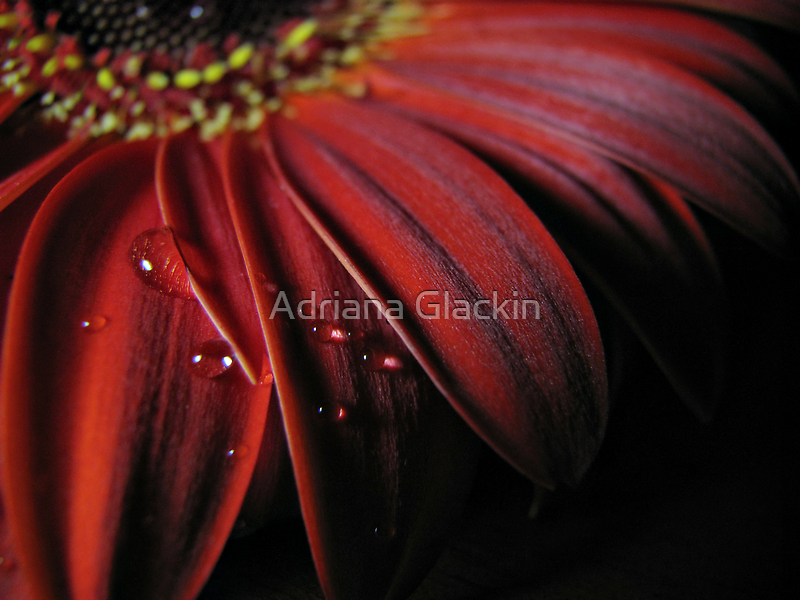 ~ the colour of my love ~ by Adriana Glackin