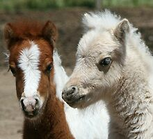 Miniature Foals by annofsilhouette