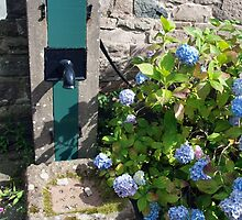 Pump and Hydrangeas by kalaryder