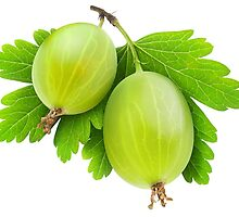 Gooseberry #2 by 6hands