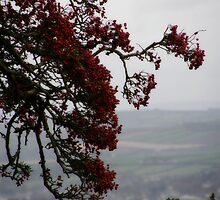 Berryland  Derry Ireland by mikequigley