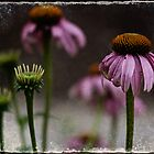 Purple Cone Flower by Rene Hales