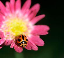 Ladybird by Sekans