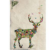My Dear Deer Photographic Print