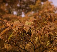 Autumnal red by Steve plowman