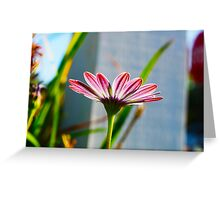 Sun Kissed Pink Flower Greeting Card