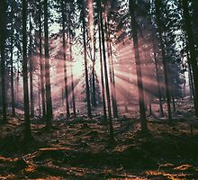 INSIDE THE WOODS by rawlenses
