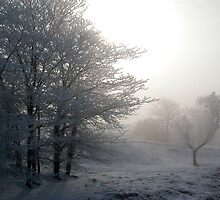 Hoary Foggy Frost in the Country by mnkreations