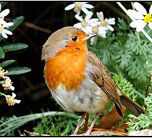 This little chap is costing a fortune in seeds. by Malcolm Chant