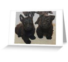 Scottish Terrier Pups Greeting Card