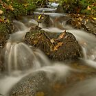 autumn, stream on Dartmoor by David Clewer
