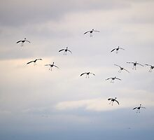Cranes Arriving by rdshaw