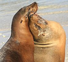 Friends Forever - Galapagos Sea Lions by Laurel Talabere