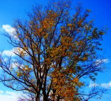 Almost Bare by Sandy Keeton