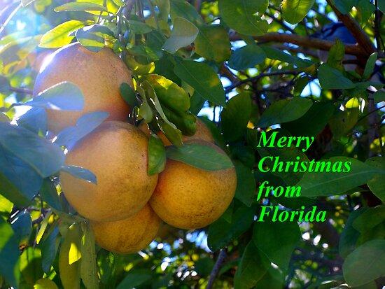 Citrus splendor by ♥⊱ B. Randi Bailey