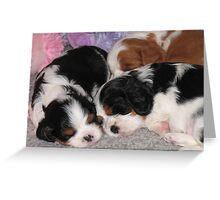 Three Sleepy Puppies Greeting Card