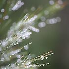 Beautiful Bokeh by Kim Roper