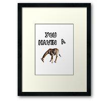 You having a giraffe? Framed Print