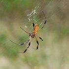 Banana Spider by Kyme