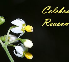 Celebrate Reason by Steve  Woodman